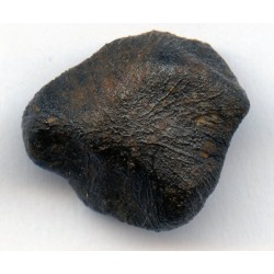 Oriented Camel Donga Meteorite