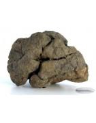 "Al Haggounia 001 ""Fossil or Paleo"" Meteorite"